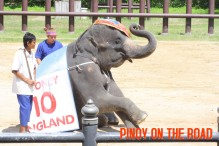 Samphran Zoo Elephant Show