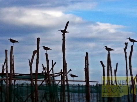 Pangasinan | The Charms of Tondol Beach | Photo Essay