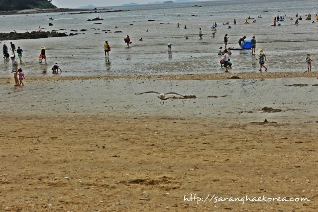 Muchangpo Beach (photo from http://www.saranghaekorea.com)